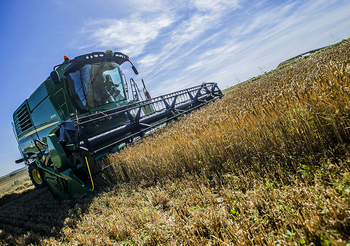 El cereal alcanza sus precios más altos del siglo
