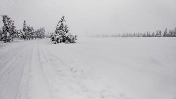 La Junta recuerda la prohibición de cazar con 15 cm de nieve