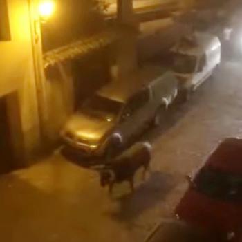 Heridos por asta de toro dos hombres en Brihuega