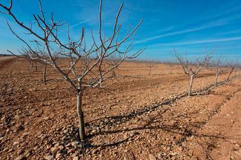 El Iriaf impulsa el injerto de 13 variedades de pistacho