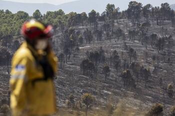 Controlado un incendio en un pinar en Torrecilla de la Jara