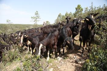 Agricultura promociona las razas autóctonas en Masterchef