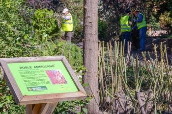 En marcha diversas mejoras en zonas verdes