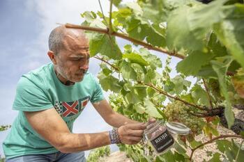 La sanidad de la uva hace prever una vendimia excelente