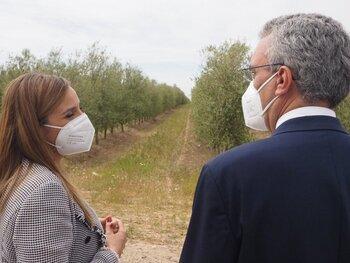 El mejor aceite de oliva de España se produce en Rioseco