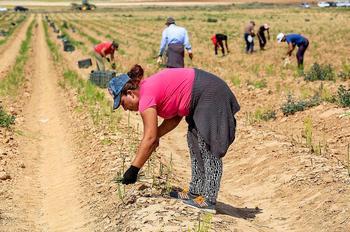 Sindicatos exigen vincular la PAC a los derechos laborales