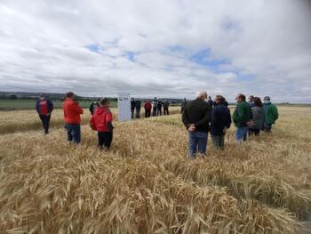 Semillas certificadas de trigo y grandes rendimientos
