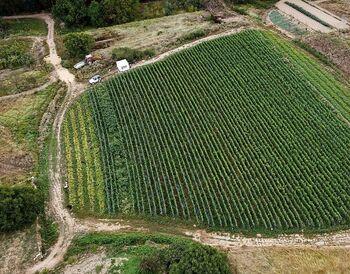Apuesta por la producción ecológica en Cigudosa