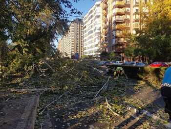 Bomberos retiran este viernes un árbol en Isabel La Católica