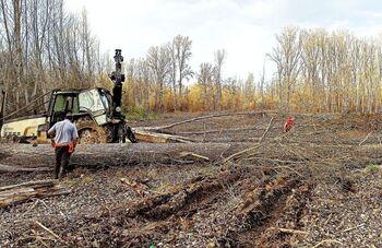 La CHD trabaja para compatibilizar fluviales y los chopos