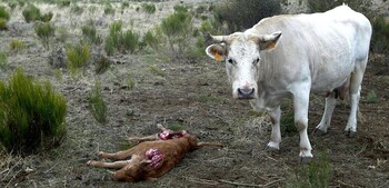 UPA, contra el discurso «ofensivo» de los animalistas