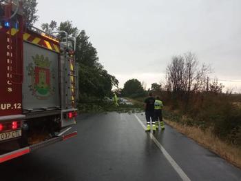 Los bomberos retiran un árbol caído de avenida de Príncipe