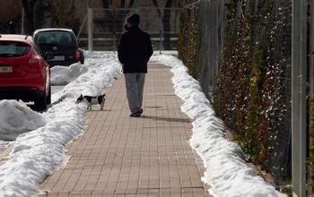 Pasear a los perros y otras dudas resueltas