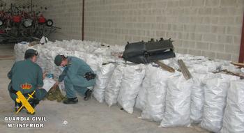 Investigado por almacenar 14 toneladas de piñas piñoneras