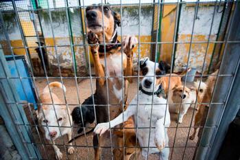 2.500 euros de multa por abandonar a un animal