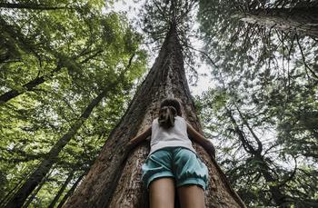 CaixaBank apoyará proyectos de mejora del patrimonio natural