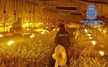 Desmantelada un enorme plantación 'indoor' de marihuana