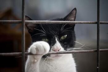 Identificada la mujer que abandonó 5 gatos en la Protectora