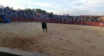 Corneado un corredor en el toro cajón de Numancia