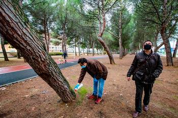 Sostenibilidad talará seis pinos «en riesgo inasumible»