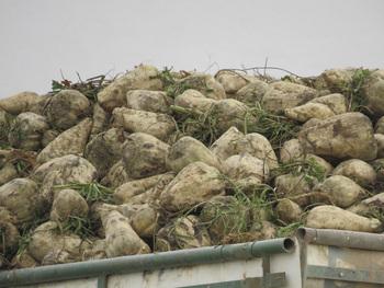 ¿Es posible una agricultura sin plaguicidas sintéticos?