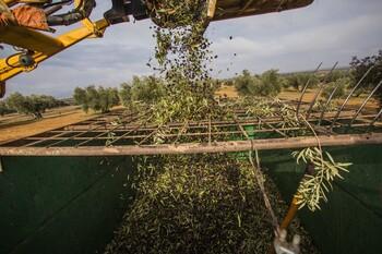 Agricultura activa el registro de movimientos de aceite