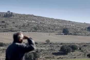 Las ovejas bombero del Valle de Valdivielso