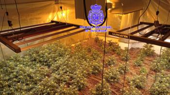 Desmantelan en Valladolid un laboratorio indoor de marihuana