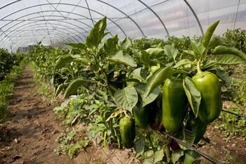 Los cultivos pueden adaptarse a la sombra