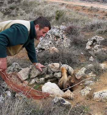 ¿Cómo prevenir los daños del conejo a la agricultura?