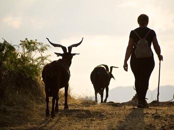 Ovino y caprino: una joya ignorada