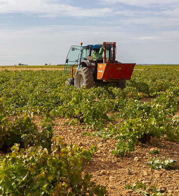 Vuelven las VIII Jornadas de Agricultura y Ganadería