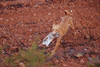 Los agricultores sufren por las limitaciones en la caza