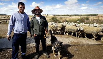 Las explotaciones de ovino caen un 30% desde 2010 en Burgos