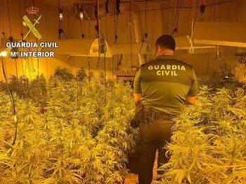 Desmantelado un cultivo de marihuana en San Martín de Pusa