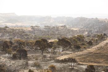 Siguen vigilando la zona incendiada del Vedado de Eguaras