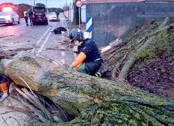 El 112 gestiona 155 incidencias por el viento pero sin daños