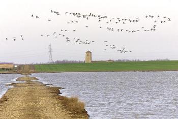 Arranca el censo anual de aves acuáticas invernantes