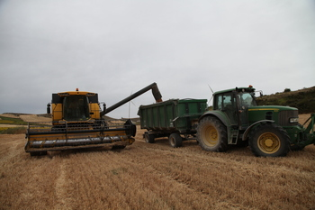 Los cereales golpean las cabañas ganaderas