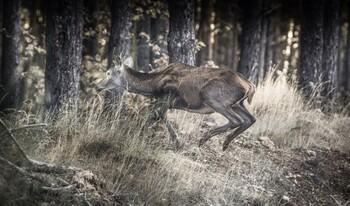 Investigan a una persona por caza furtiva en Chércoles