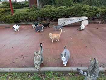 Denuncian que el Ayuntamiento no controla colonias felinas