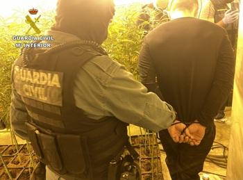 Olías: Detenidos tres ocupas por 1.425 plantas de marihuana