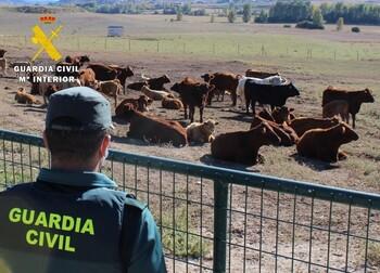 Detenido por estafar 48.000 euros a un ganadero burgalés
