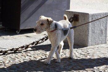 Una botella plegable para eliminar los orines de los perros