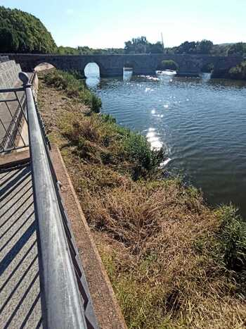 Retiran arbolado junto al Puente Romano para su iluminación