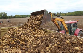 Recogida de patatas en una finca cercana a Ventosa de Pisuerga (Palencia).