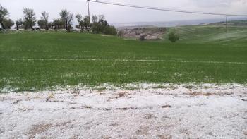 El pedrisco de La Peraleja arrasa varias hectáreas de cereal
