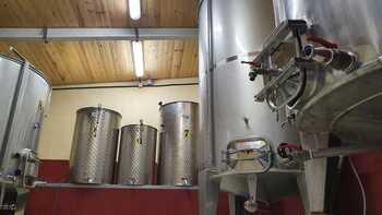 Emprendimiento vitivinícola