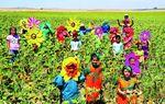 VILLALUMBROSO: Los niños y las flores son los que ponen color en los pueblos y en los campos. En esta foto de Villalumbroso venos unos coloridos campos de girasoles.