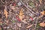 """""""BASURALEZA"""": Abandono de residuos en la naturaleza"""